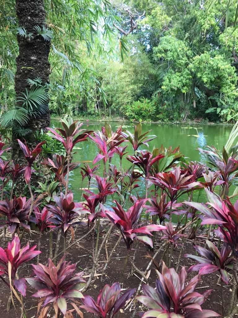 jardin-botanique-nature-fleur-caraibes-guadeloupe-basse terre-vegetation-plan d'eau