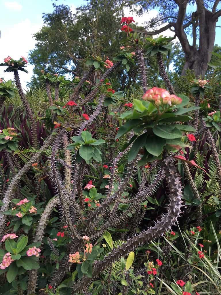 jardin-botanique-nature-fleur-caraibes-guadeloupe-basse terre-vegetation-cactus