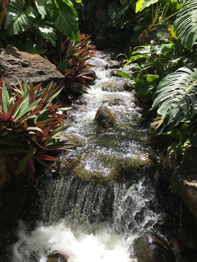 jardin-botanique-nature-fleur-caraibes-guadeloupe-basse terre-vegetation-plan d'eau-cascade