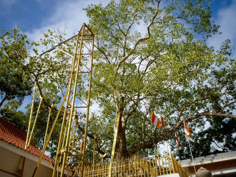 Le temple Jaya Sri Maha Bodhi