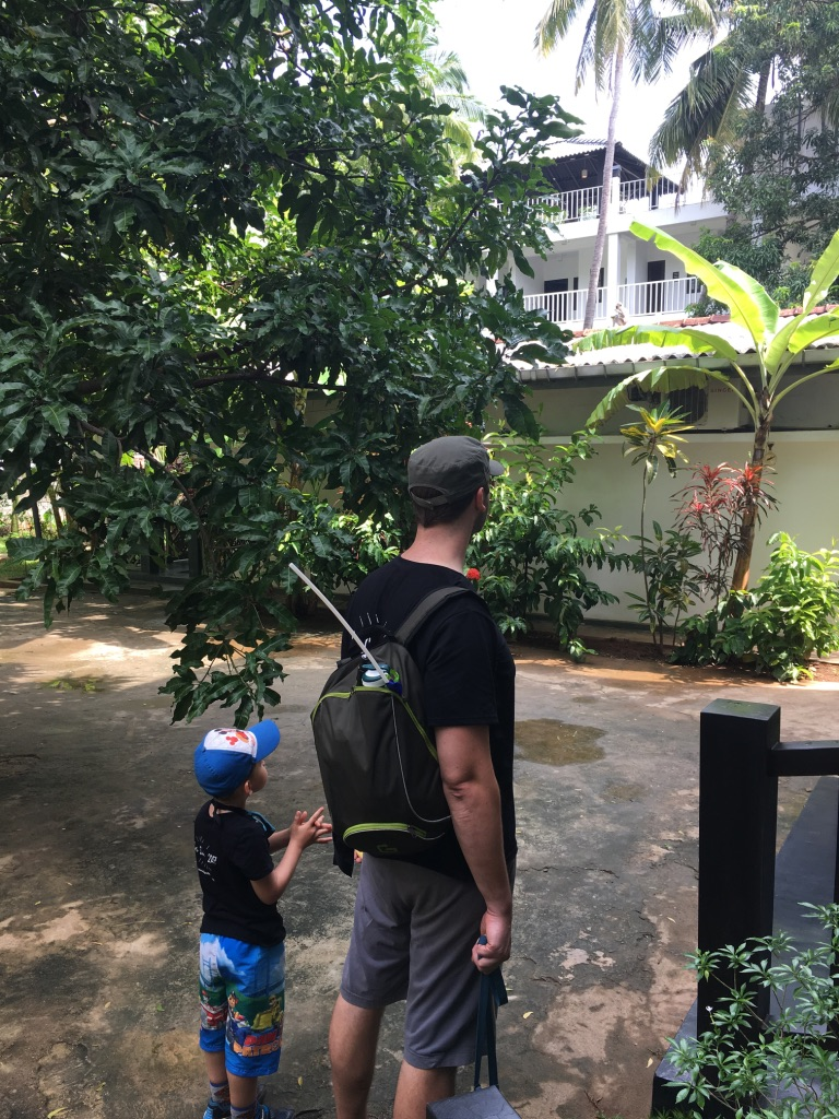 Jeff et Axel observent les singes de notre guest-house au Sri Lanka
