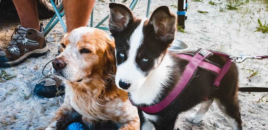 Nos chiens à la plage
