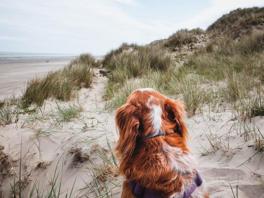 Voyager avec son chien à la plage