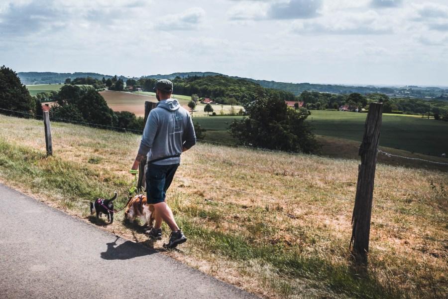 Promenade avec les chiens à Boescheppe