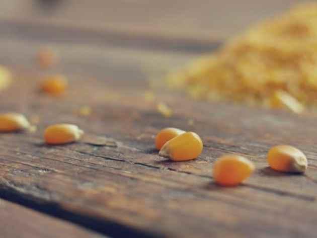 grain et semoules de maïs