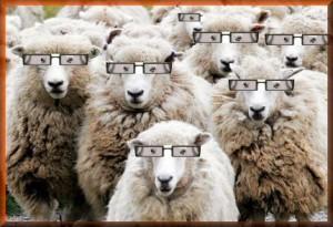 images-droles-moutons
