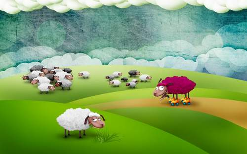 Funny sheep pictures for desktop1