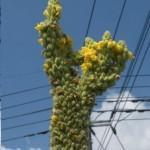 exposee-aux-radiations-de-fukushima-cette-plante-a-etrangeme