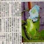 les-radiations-nucleaires-de-fukushima-ont-transforme-le-gen