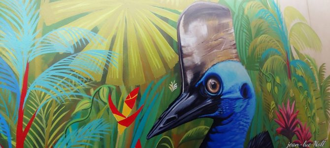 Australie – Queensland – Le Cassowary