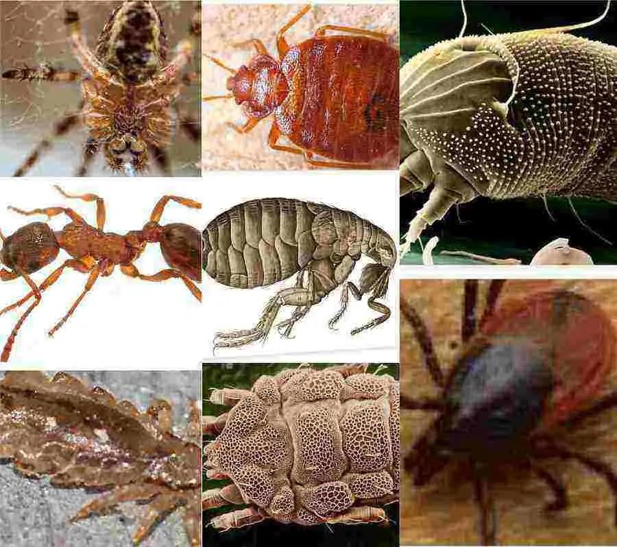 Read more about the article Insectes qui piquent dans le lit: comprendre pour mieux traiter
