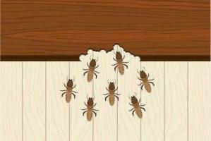 Insectes qui mangent le bois: tout savoir sur ces insectes xylophages