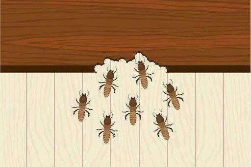 Read more about the article Insectes qui mangent le bois: tout savoir sur ces insectes xylophages