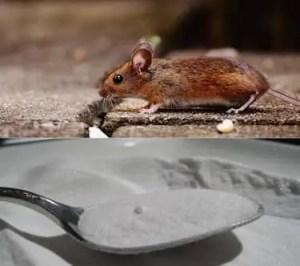 Bicarbonate de soude contre souris
