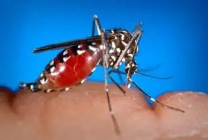 Comment apaiser une piqûre de moustique