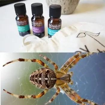 Huiles essentielles contre les araignées