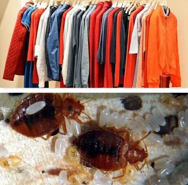 Comment se débarrasser des punaises dans les vêtements