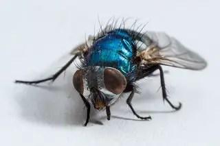 Comment éliminer efficacement des mouches dans une maison ?