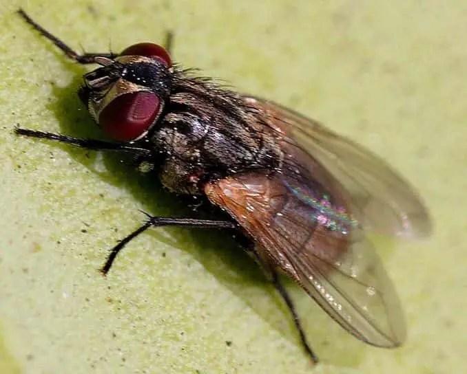 mouche sur une façade