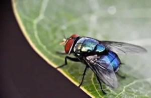Invasion de mouches dans une chambre, que faire?