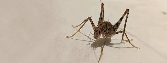 Comment se débarrasser des insectes dans la maison