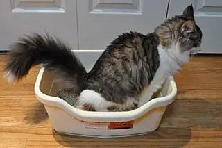 Litière à chat pour faire fuir les souris