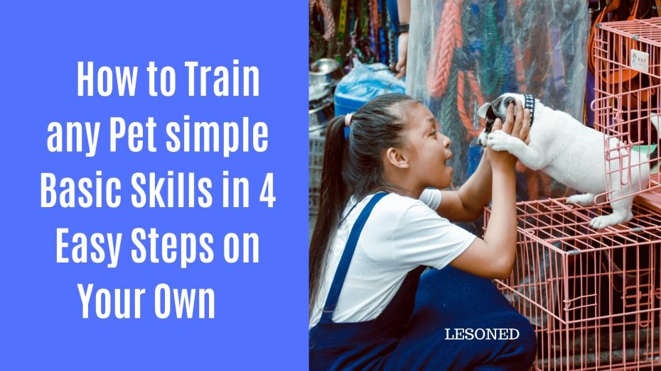 How to Train any Pet simple Basic Skills in 4 Easy Steps on Your Own