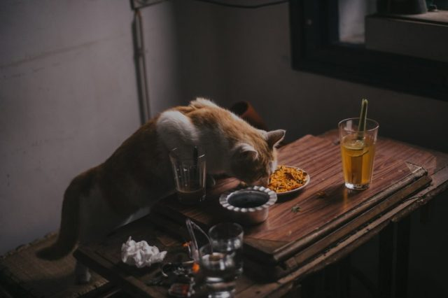 pet eating owners left overs from a table