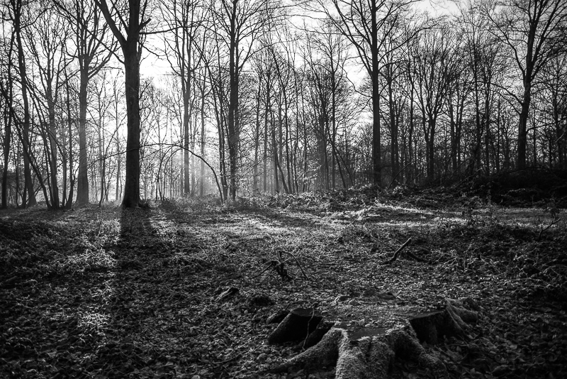 forest-2_bw