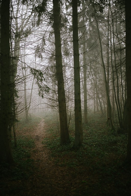Deep in the woods..