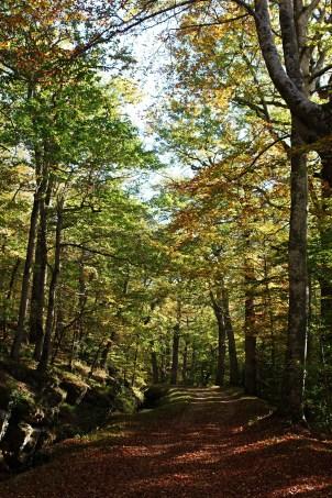 Couleurs d'automne dans la montagne noire