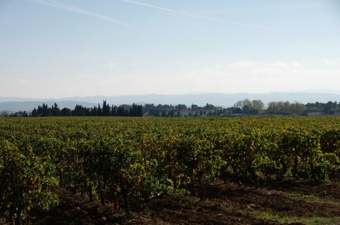 Vignes autour de Carcassonne