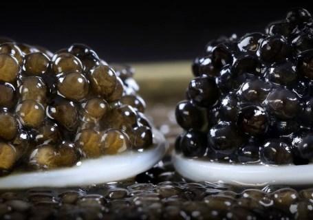 PDT-2018-caviar-impertinent-et-classique