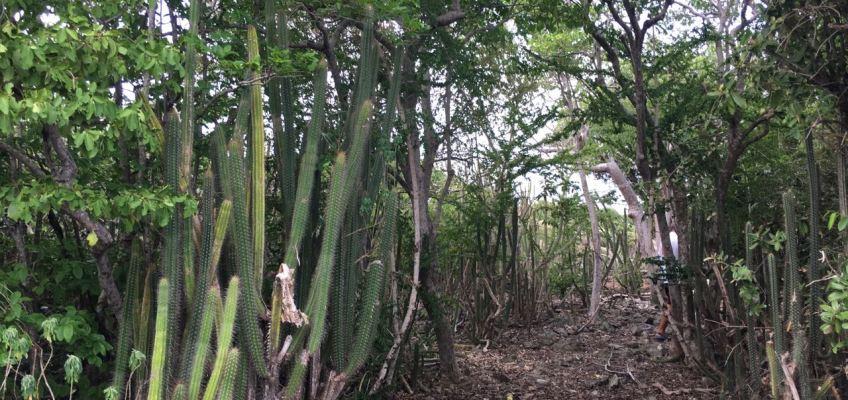 Cactus, palétuviers
