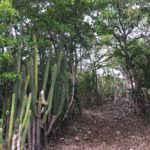 Végétation, cactus, palétuviers ...