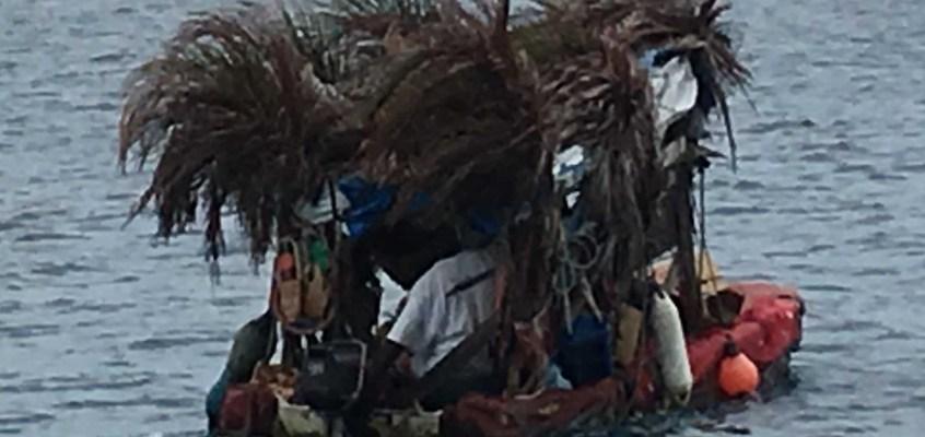 Boy-Boat, vendeur de légumes et fruits, en bateau décoré de branches