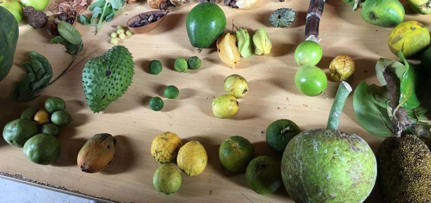 Fruits du domaine