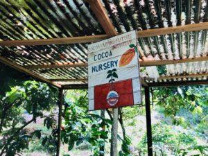 Cacao nursery