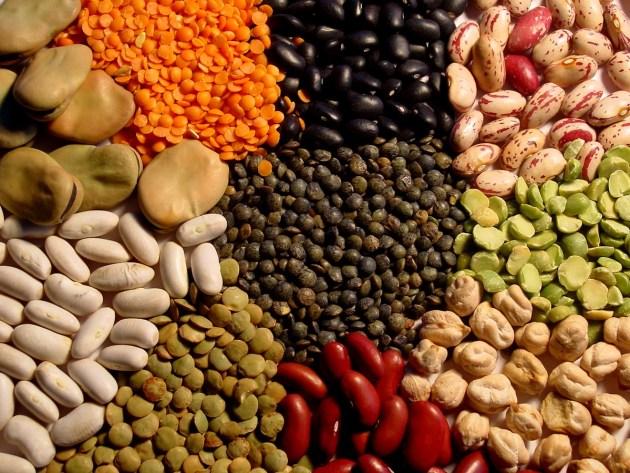 protéines_végétales_2