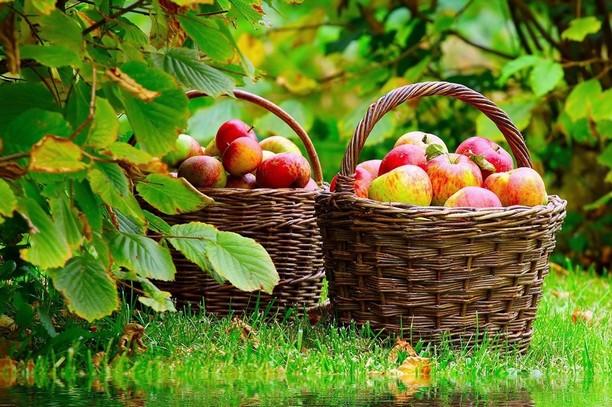 manger-fruit-hors-repas