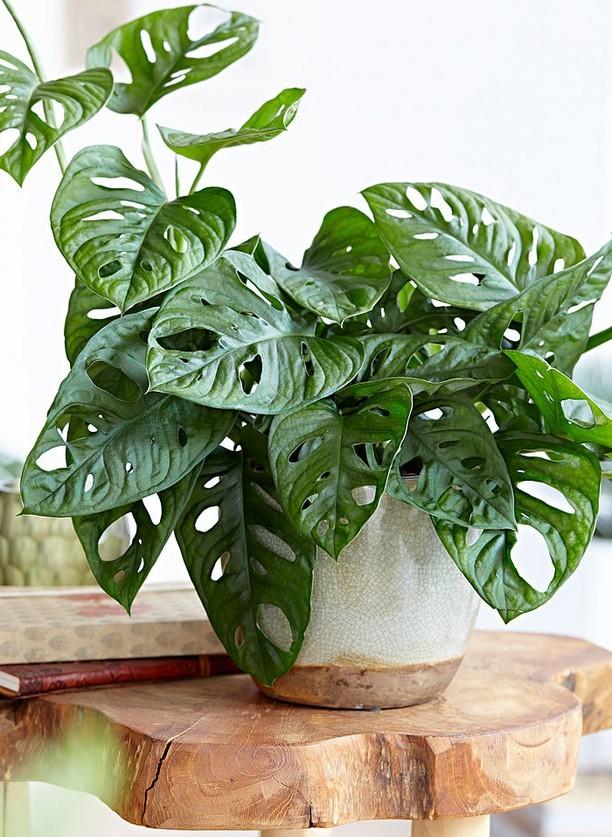 9 idées de cadeaux green