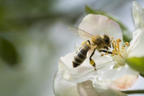 Un pop-up store dédié aux vertus des plantes et produits de la ruche 🌿🍯
