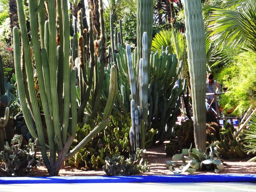 cactus jardin de majorelle