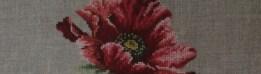 cropped-dsc076501.jpg