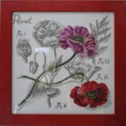 Mélange de rose et de rouge : les pavots