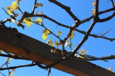 Balade_viticole_3