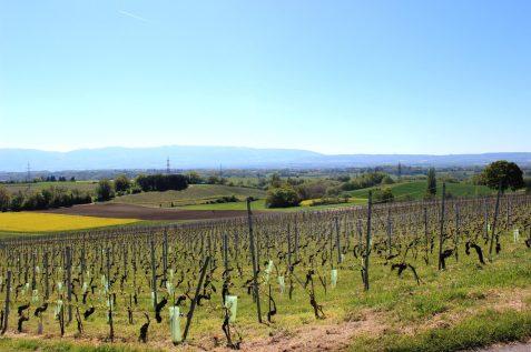 Balade_viticole_5