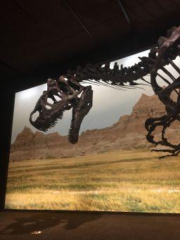 dinosaure_museum_1