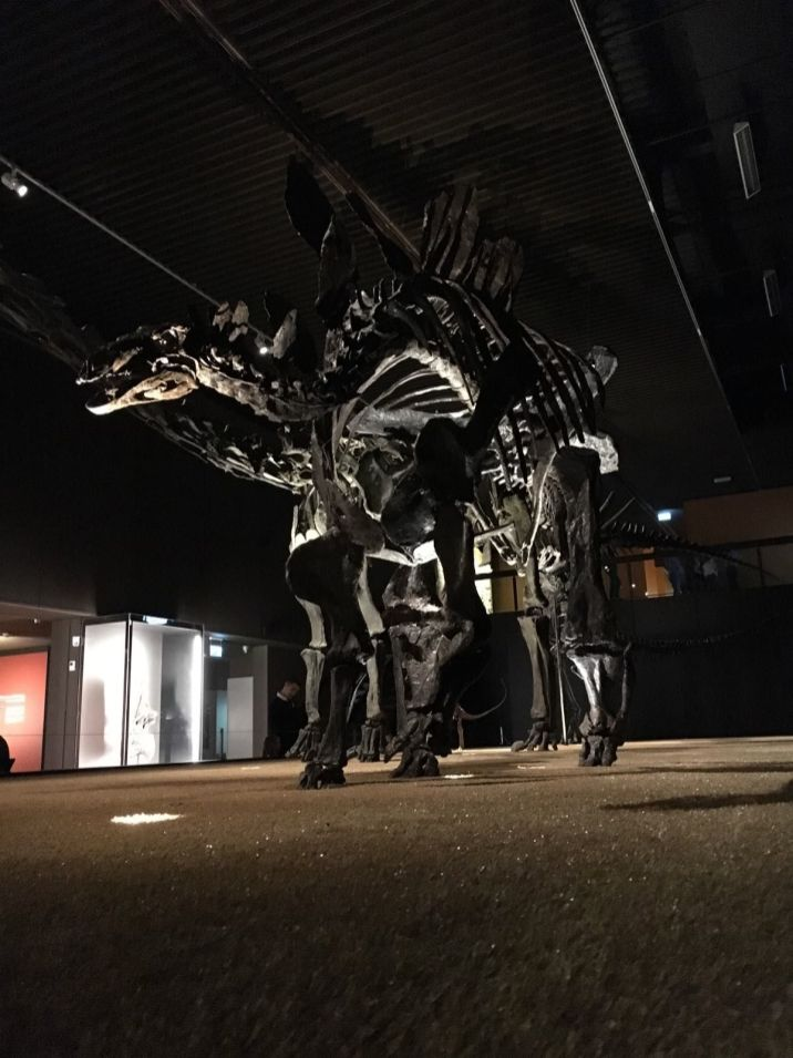 dinosaure_museum_3