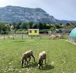 Et des moutons